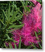 Pink Feather Metal Print
