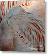 Pink Flamingo 7 Metal Print