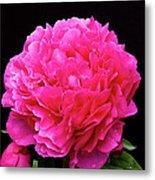 Pink Flower After Rain Metal Print