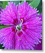 Pink Flower Miss You Metal Print