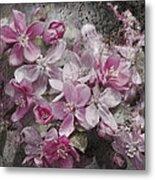 Pink Flowering Crabapple And Grunge Metal Print