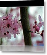 Pink Flowering Tree In Spring Framed Metal Print