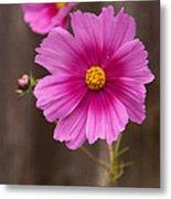 Pink Flowers And Wood  Metal Print