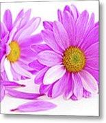 Pink Flowers Metal Print by Elena Elisseeva