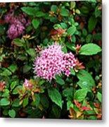 Pink Flowers Of Little Bavaria Metal Print