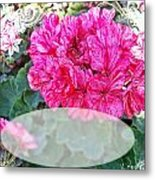 Pink Geranium Greeting Card Blank Metal Print