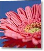 Pink Gerber 2 Metal Print by Al Hurley