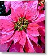 Pink Holiday Poinsettias Metal Print