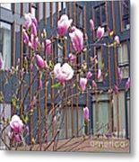 Pink Magnolia. Square Format Metal Print