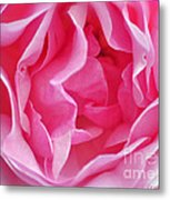 Pink March Rose 2012 Limited Edition Metal Print