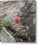 Pink Mountain Flower Metal Print