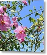 Pink Musk Mallow Metal Print by Pamela Patch