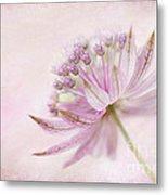 Pink Palette Metal Print by Jacky Parker