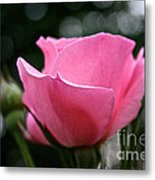 Pink Pearl Metal Print