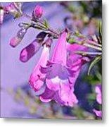 pink Penstemon  Metal Print