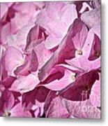 Pink Petal Pushing Metal Print