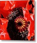 Pink Poppy Close Up Metal Print