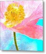 Pink Poppy On Blue Metal Print