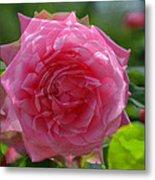 Pink Puzzled Rose Metal Print
