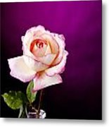 Pink Rose Against Purple Spotlight Metal Print by M K  Miller