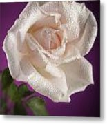 Pink Rose And Rain Drops Metal Print by M K  Miller
