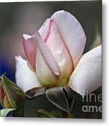 Pink Rose Bloom Metal Print