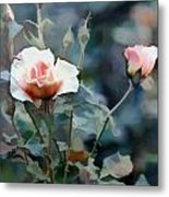 Pink Rose Bush Metal Print