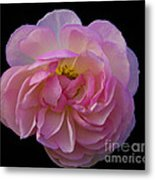 Pink Rose On Black Metal Print