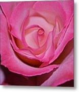 Pink Rose Metal Print by Saifon Anaya