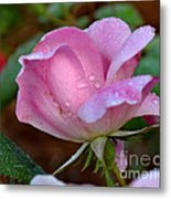 Pink Rose With Water Drops-33 Metal Print