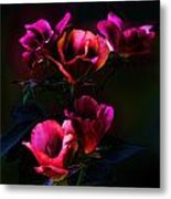 Pink Roses Of The Night Metal Print