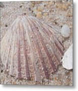 Pink Scallop Shell Metal Print
