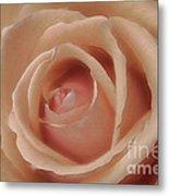 Pink Sensual Rose Metal Print