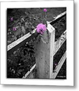 Pink Touch Metal Print