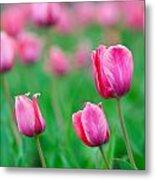 Pink Tulip Bed Metal Print