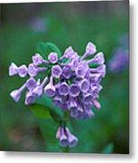Pink Virginia Bluebells 1c Metal Print