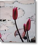 Pink Water Lily Buds Metal Print