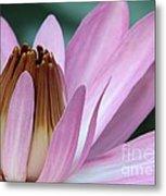 Pink Water Lily Macro Metal Print