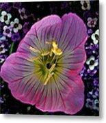 Pink Wildflower  Metal Print