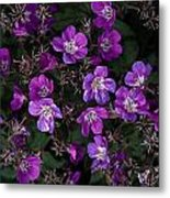 Pinkish-purple Wildflowers Geranium Metal Print
