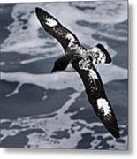 Pintado Petrel - Ancient Mariner Metal Print