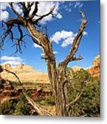 Pinwheel Tree Metal Print