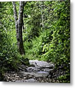 Pisgah Path Metal Print