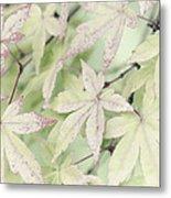 Pistachio Maple Metal Print by David Lade