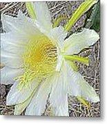 Pitaya Flower Metal Print