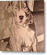Pitty Pet Portrait Metal Print by Yvonne Scott