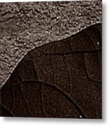 Plant And Mineral Metal Print