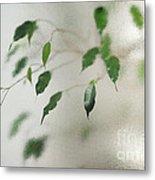 Plant Behind Glass Metal Print