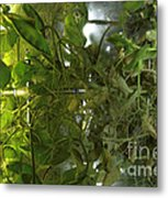 Plant Growth Experiment, Iss Metal Print