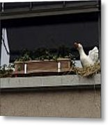Plants And Animal Figures In The Balcony Of A Building In Lucern Metal Print